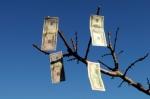 iStock_money